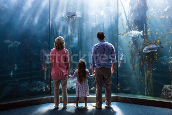 Famille regarder poissons réservoir aquarium homme Photo stock © wavebreak_media