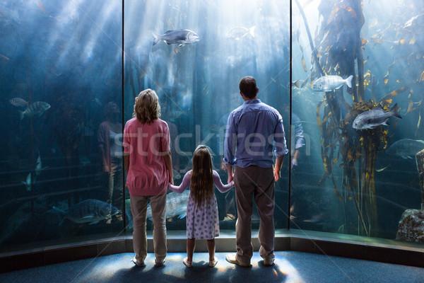 Family looking  at fish tank Stock photo © wavebreak_media