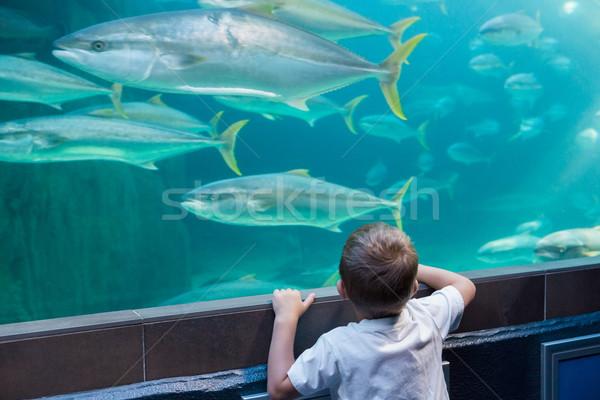 Weinig jongen naar vis tank aquarium Stockfoto © wavebreak_media