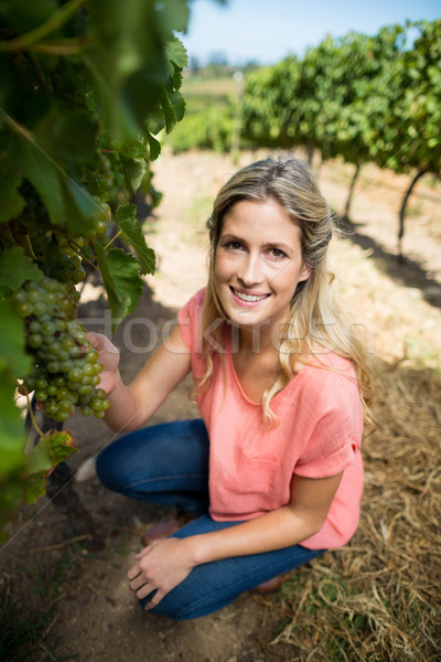 Portrait of woman holding grapes while crouching at vineyard Stock photo © wavebreak_media