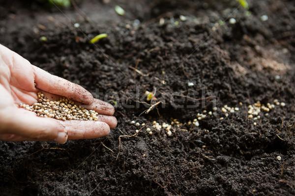 Handen vrouw zaden vuil gras Stockfoto © wavebreak_media