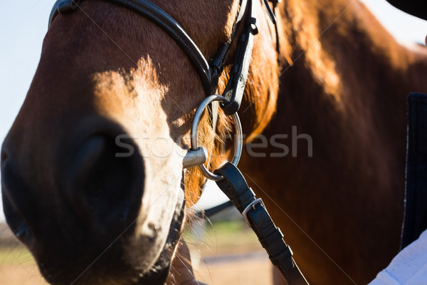 Brown horse standing in the field on a sunny day Stock photo © wavebreak_media