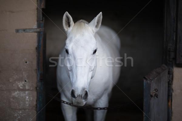 白馬 立って 安定した 肖像 空 自然 ストックフォト © wavebreak_media