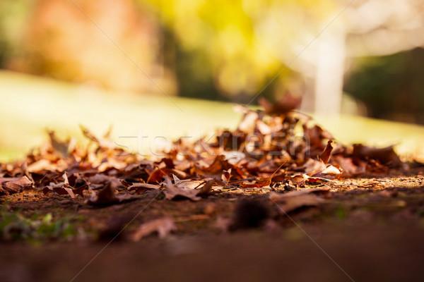 Surface level shot of autumn leaves Stock photo © wavebreak_media