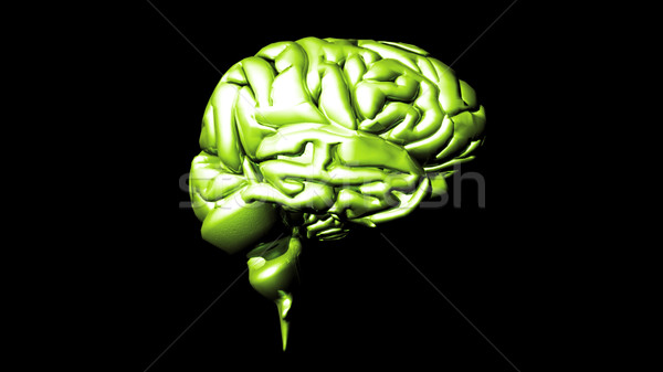 highly detailed animation of a human brain Stock photo © wavebreak_media