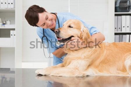 Fókuszált állatorvos megvizsgál labrador iroda nő Stock fotó © wavebreak_media