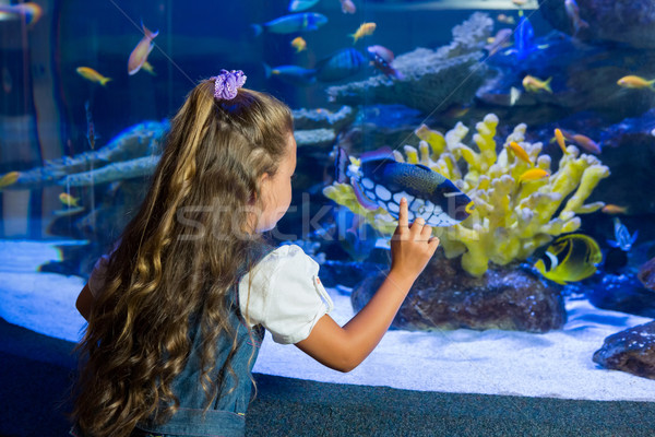 Little girl looking at fish tank Stock photo © wavebreak_media