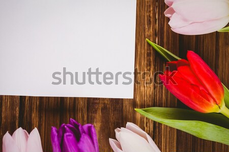 Composite image of tulip Stock photo © wavebreak_media