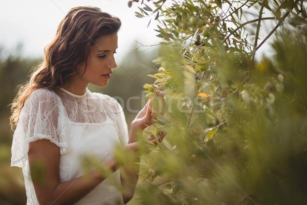 Mooie jonge vrouw olijfboom boerderij Stockfoto © wavebreak_media