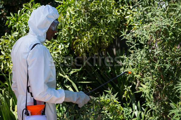 Man doing pest control Stock photo © wavebreak_media