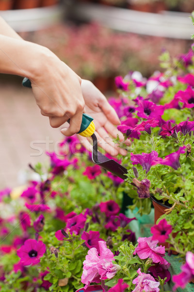 Gardener spading flowers in the pot Stock photo © wavebreak_media