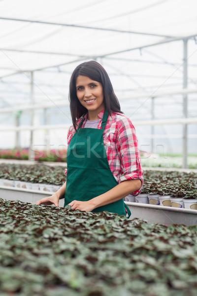 Woman standing beside row of seedling in green house Stock photo © wavebreak_media