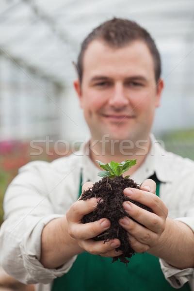 Homem planta solo mãos estufa Foto stock © wavebreak_media
