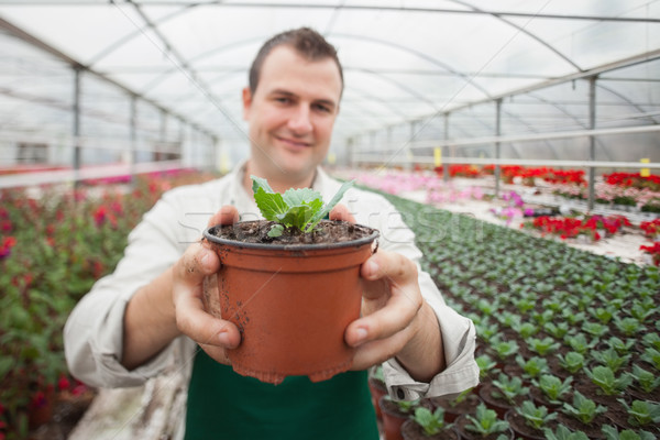 Man holding a potted plant up and smiling in greenhouse Stock photo © wavebreak_media