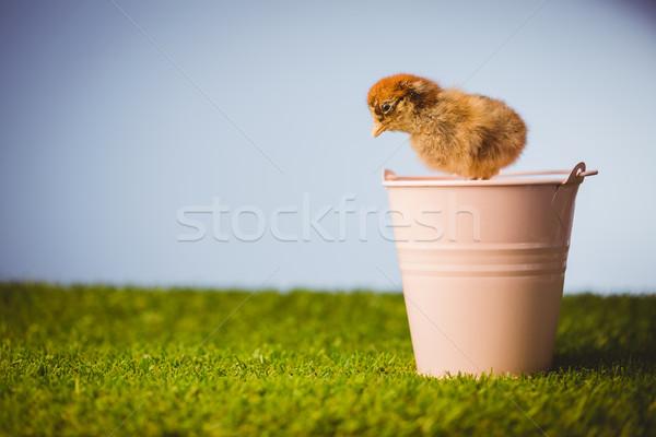 фаршированный куриного розовый ковша зеленая трава Сток-фото © wavebreak_media