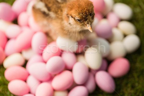 Töltött csirke húsvéti tojások zöld fű húsvét Stock fotó © wavebreak_media