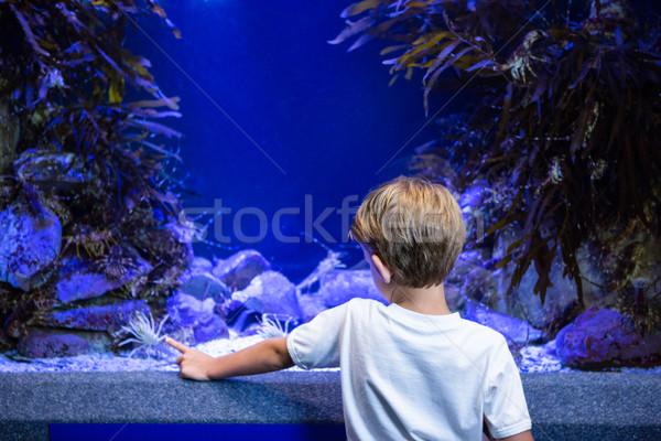 Jonge man wijzend garnalen tank aquarium kind Stockfoto © wavebreak_media
