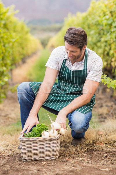 Young happy farmer looking at a basket of vegetables Stock photo © wavebreak_media