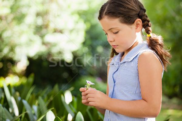 Girl holding flower standing at backyard Stock photo © wavebreak_media