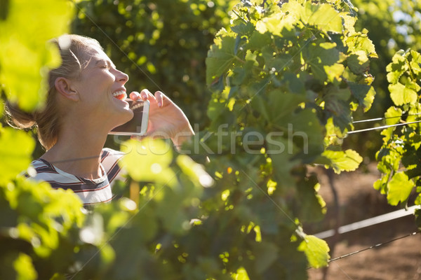 Female vintner talking on mobile phone in vineyard Stock photo © wavebreak_media