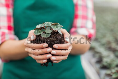 Woman holding a dough Stock photo © wavebreak_media