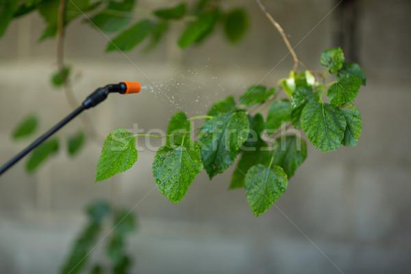 Brindille Retour vert industrie Photo stock © wavebreak_media