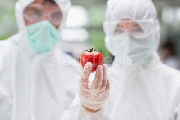 Two students standing at the laboratory looking at a tomato Stock photo © wavebreak_media