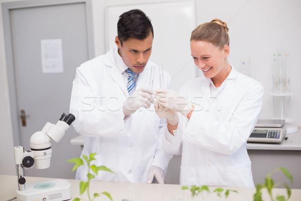 Scientist examining tubes  Stock photo © wavebreak_media