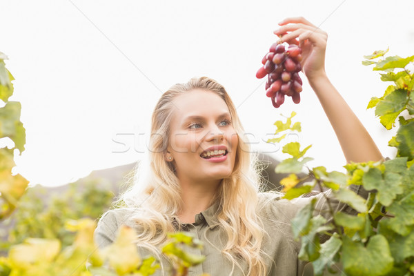Smiling blonde winegrower holding a red grape Stock photo © wavebreak_media