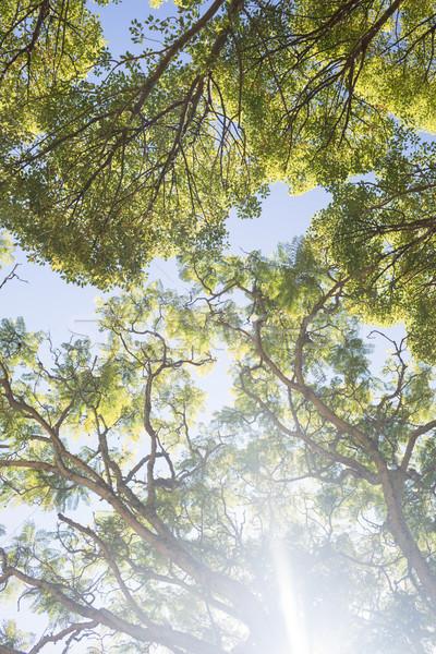 ярко солнечный свет деревья парка дерево счастливым Сток-фото © wavebreak_media