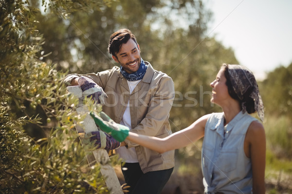 Cheerful couple looking at each other at olive farm Stock photo © wavebreak_media