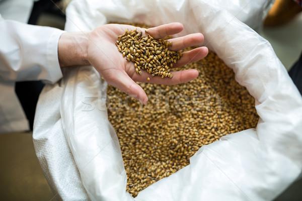 Brewer showing grains Stock photo © wavebreak_media