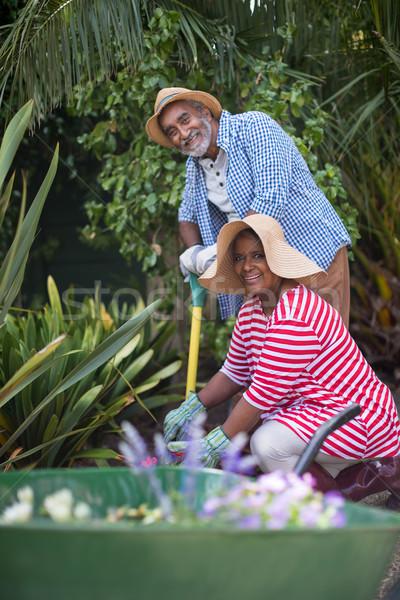 Portret tuinieren gelukkig vrouw boom Stockfoto © wavebreak_media
