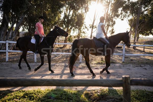 Arkadaşlar binicilik atlar ahır kadın gökyüzü Stok fotoğraf © wavebreak_media