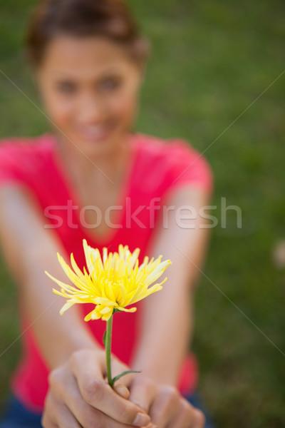 Vrouw gele bloem armen bereiken focus Stockfoto © wavebreak_media