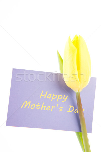 Yellow tulip with a mauve happy mothers day card on a white back Stock photo © wavebreak_media
