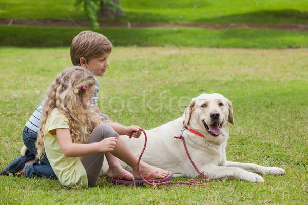 Due ragazzi pet cane parco Foto d'archivio © wavebreak_media