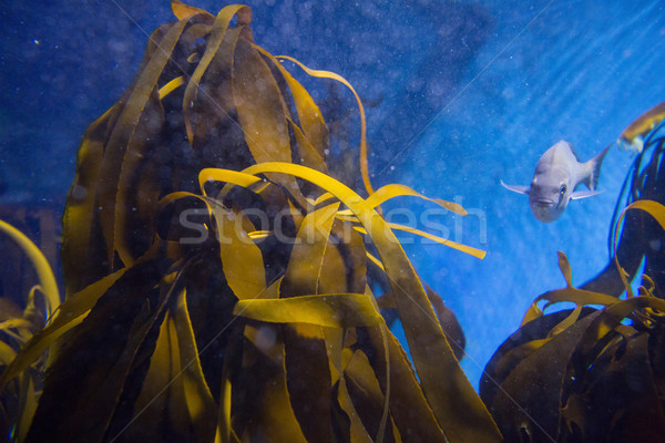 Balık yüzme tank deniz mavi eğlence Stok fotoğraf © wavebreak_media
