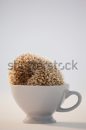 Close-up of porcupine in mug Stock photo © wavebreak_media
