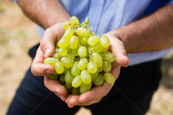 Mid section of man holding harvested grapes Stock photo © wavebreak_media