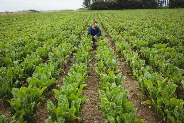 фермер зерновые области собака человека Сток-фото © wavebreak_media