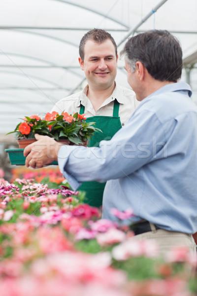 Alkalmazott doboz virágok férfi üvegház kert Stock fotó © wavebreak_media