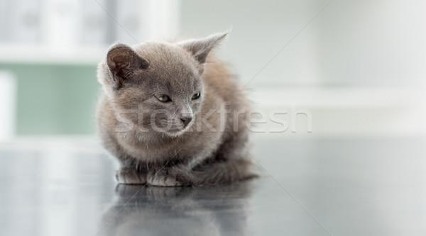 Сток-фото: котенка · ветеринарный · служба · Cute · таблице · кошки