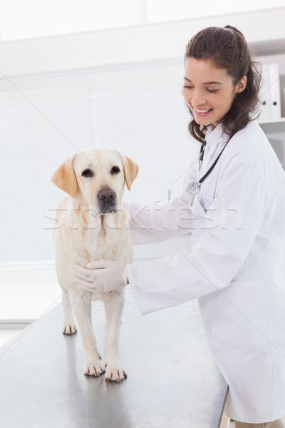 Zdjęcia stock: Wesoły · weterynarz · cute · psa · medycznych