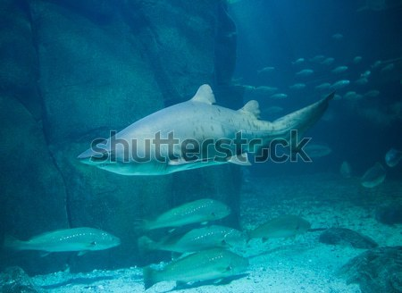 Cápa úszik hal tank akvárium tenger Stock fotó © wavebreak_media