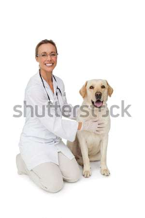 Boldog állatorvos citromsárga labrador kutya mosolyog Stock fotó © wavebreak_media
