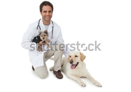 Sonriendo veterinario posando yorkshire terrier amarillo Foto stock © wavebreak_media