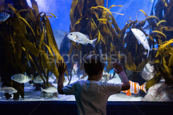 Young man looking at fish and algae  Stock photo © wavebreak_media