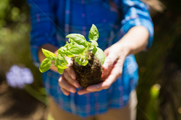 Mid section of woman holding sapling in garden Stock photo © wavebreak_media