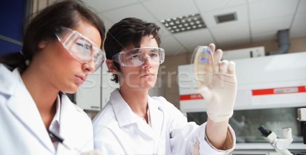 Estudantes ciência olhando prato laboratório Foto stock © wavebreak_media